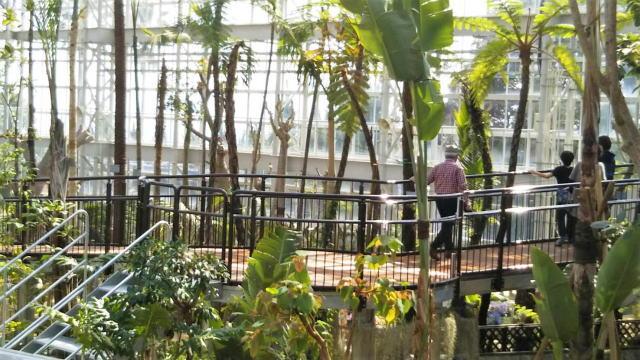 リニューアルした広島市植物公園の大温室