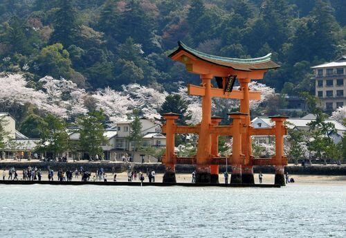 宮島の桜、海から見た満開の風景