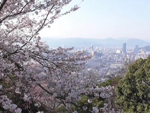 黄金山の桜と広島市街地の風景2