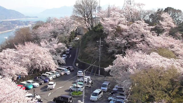 黄金山の桜、広島市街地と島々見渡す絶景ビュー