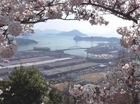 黄金山の桜と瀬戸内海の風景