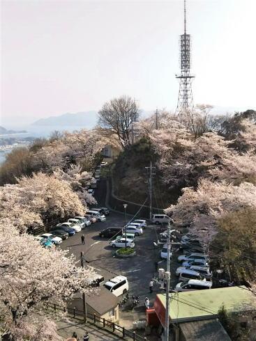 黄金山の桜 山頂からの眺め2