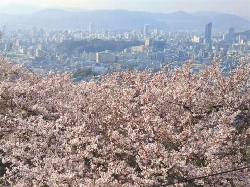 黄金山の桜と広島市街地の風景