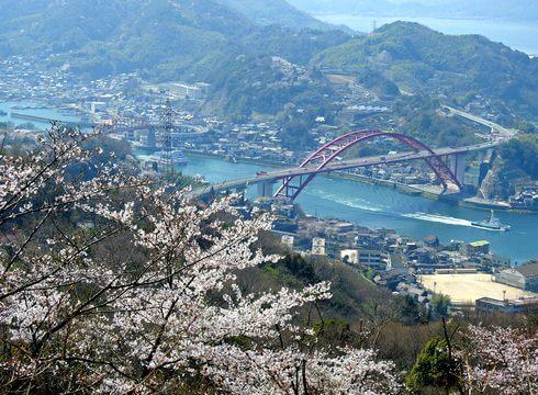 音戸の瀬戸公園の桜、山頂の展望エリアからの眺望