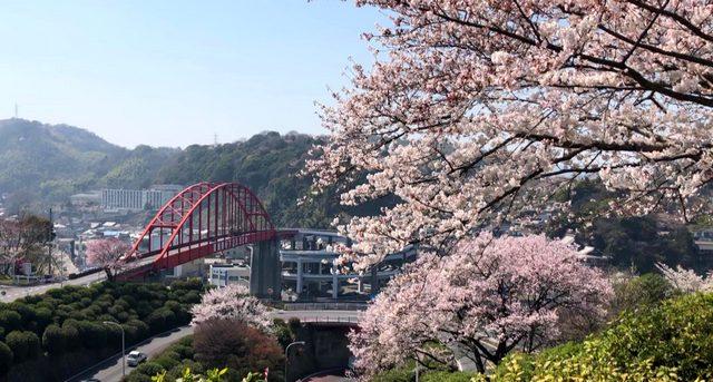 音戸の瀬戸公園の桜、海と朱色の橋を望む絶景お花見