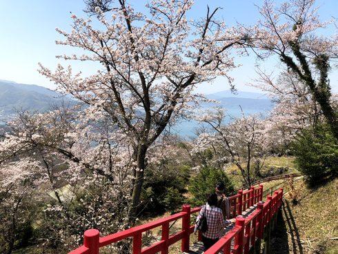 高烏台公園(高烏台)の桜