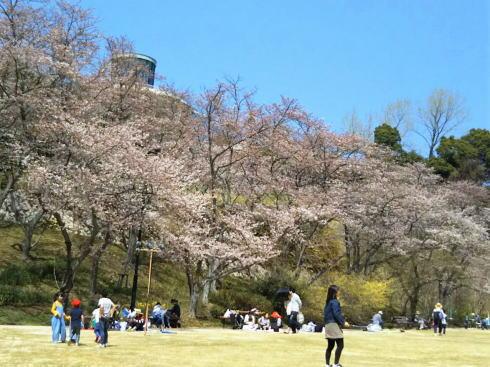 植物公園の桜 写真3