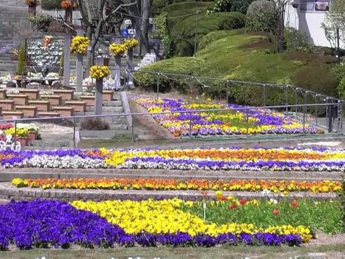 植物公園の春