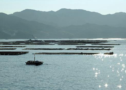 江田島のカキ筏
