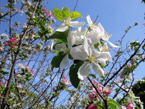 広島・渝華園の園内に季節の花々