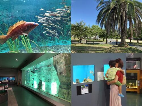 因島にプチ水族館!福山大学マリンバイオセンター水族館