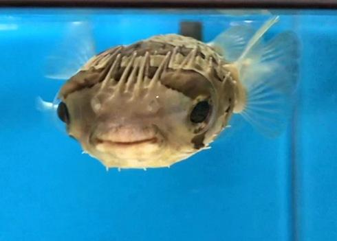 因島に、福山大学マリンバイオセンター水族館
