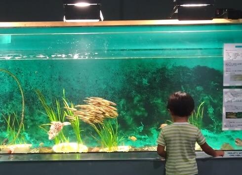 因島の水族館、福山大学マリンバイオセンターに子供も夢中