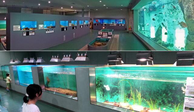 因島・福山大学マリンバイオセンター水族館の全景