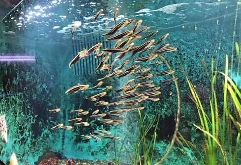 因島の水族館、福山大学マリンバイオセンター