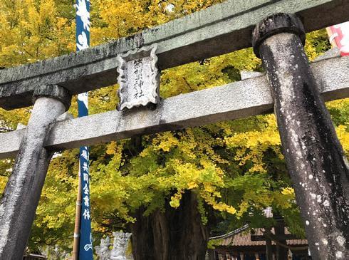 筒賀神社?大歳神社の境内に、筒賀の大銀杏