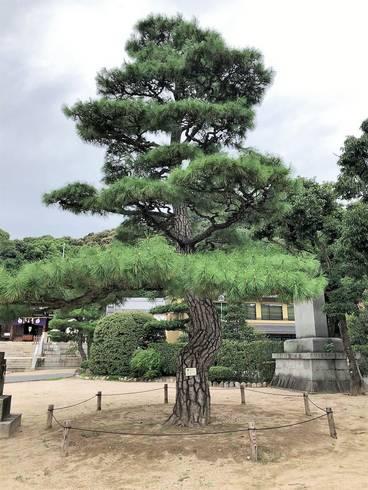 鶴羽根神社09