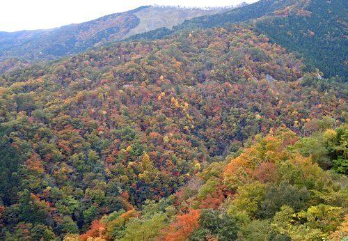 猪山展望台からみる紅葉