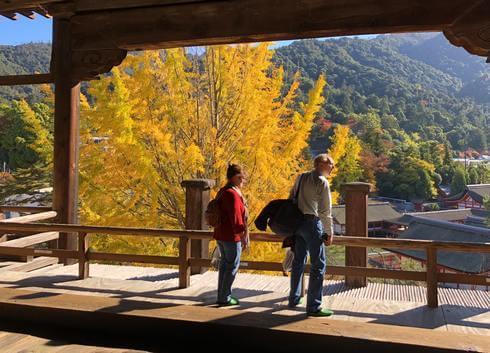 宮島の紅葉・千畳閣の前にある大きな銀杏の木