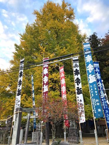 筒賀神社の鳥居と、筒賀の大銀杏