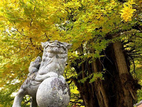 筒賀の大銀杏!大歳神社を包み込む、樹齢1000年以上の巨木