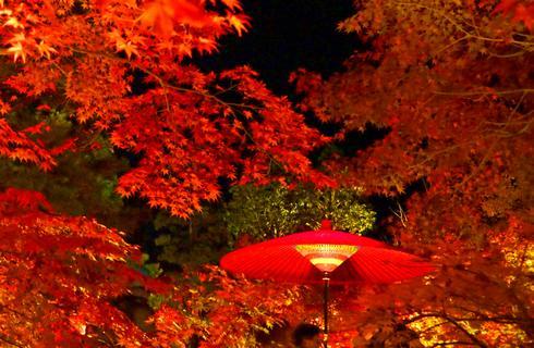 縮景園で紅葉ライトアップ、もみじまつり開催