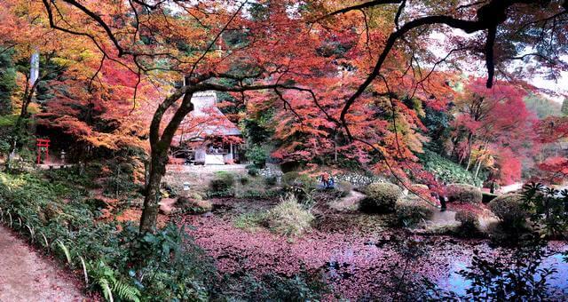 吉水園の紅葉 パノラマ