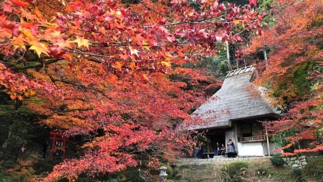 吉水園の紅葉、秋の一般公開で江戸モミジなど美しく
