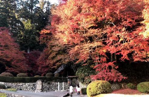 吉水園の紅葉、秋の一般公開の様子