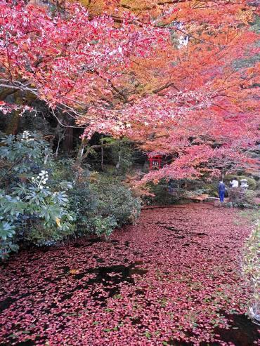 吉水園の紅葉、秋の一般公開