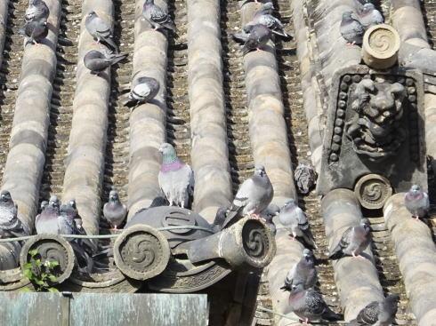 尾道 浄土寺に鳩