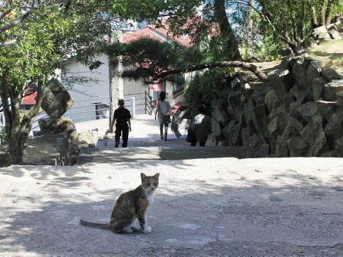 尾道市 千光寺 の近くで猫