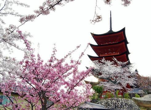 宮島・五重塔(春)