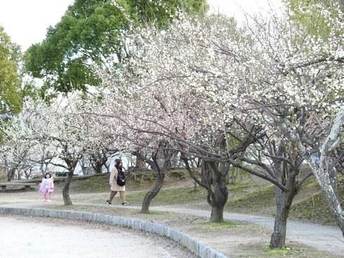 八木梅林公園、3月第一日曜日には梅祭りも開催
