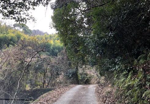 天狗岩へ向かう道は細い林道