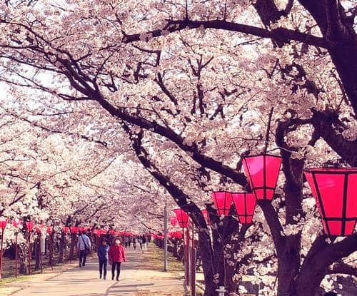 はつかいち桜まつり 2019、けん玉夢カップも開催