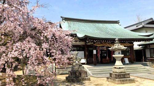観音神社と枝垂桜