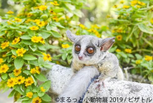 まるっと⼩動物展 in 広島