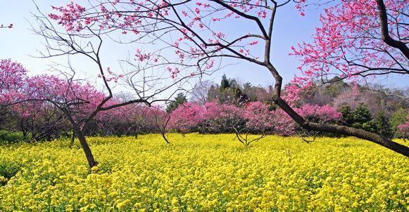 桃色の園「ラ・スカイファーム」に菊桃を見に行こう!