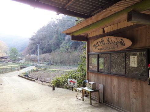 広島県福山市 平家谷つばき園 画像4