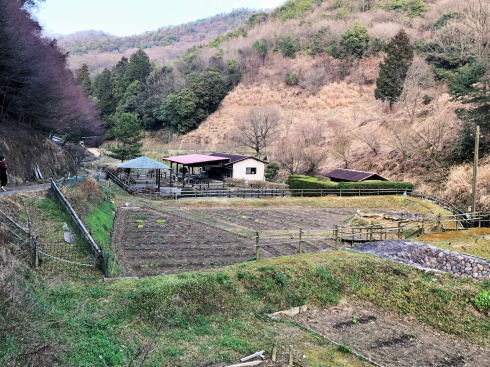 広島県福山市 平家谷つばき園 画像5