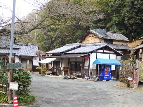 広島県福山市 平家谷つばき園 画像16