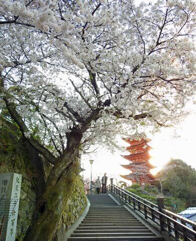 宮島、五重塔と桜