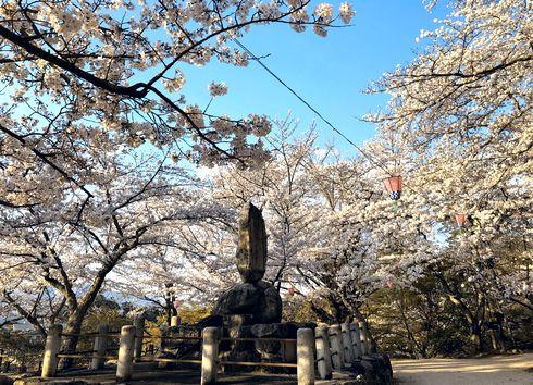 宮島の桜スポット、光明院前の公園