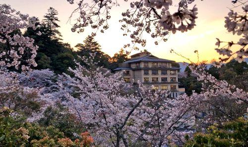 夕暮れ時の宮島 多宝塔ちかくの桜