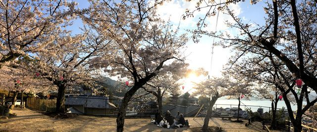 宮島の桜、光明院 誓真大徳頌徳碑