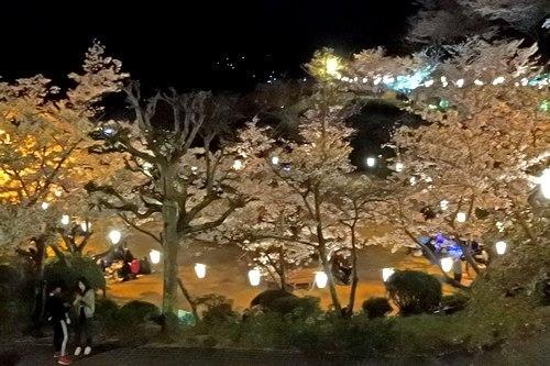 千光寺公園の夜桜