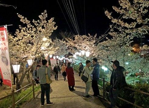 尾道 千光寺公園の夜桜ライトアップ、屋台も