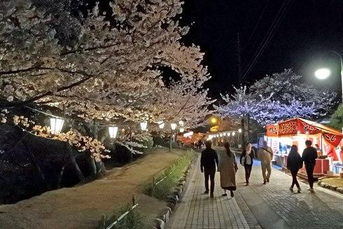 千光寺公園の夜桜ライトアップ、屋台からいい香りも