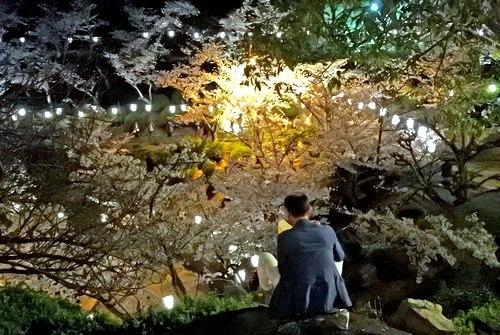 尾道 千光寺公園で夜桜を楽しむ男性